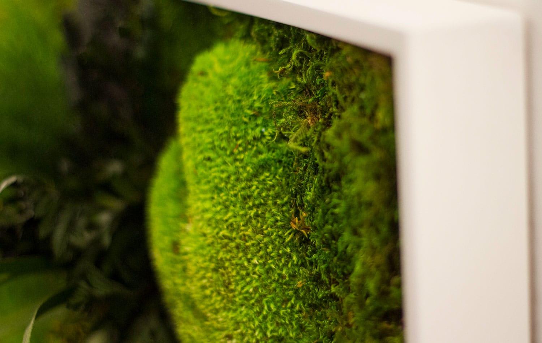 EAZEE Werbeagentur Closeup Greenwall Studio Muenchen